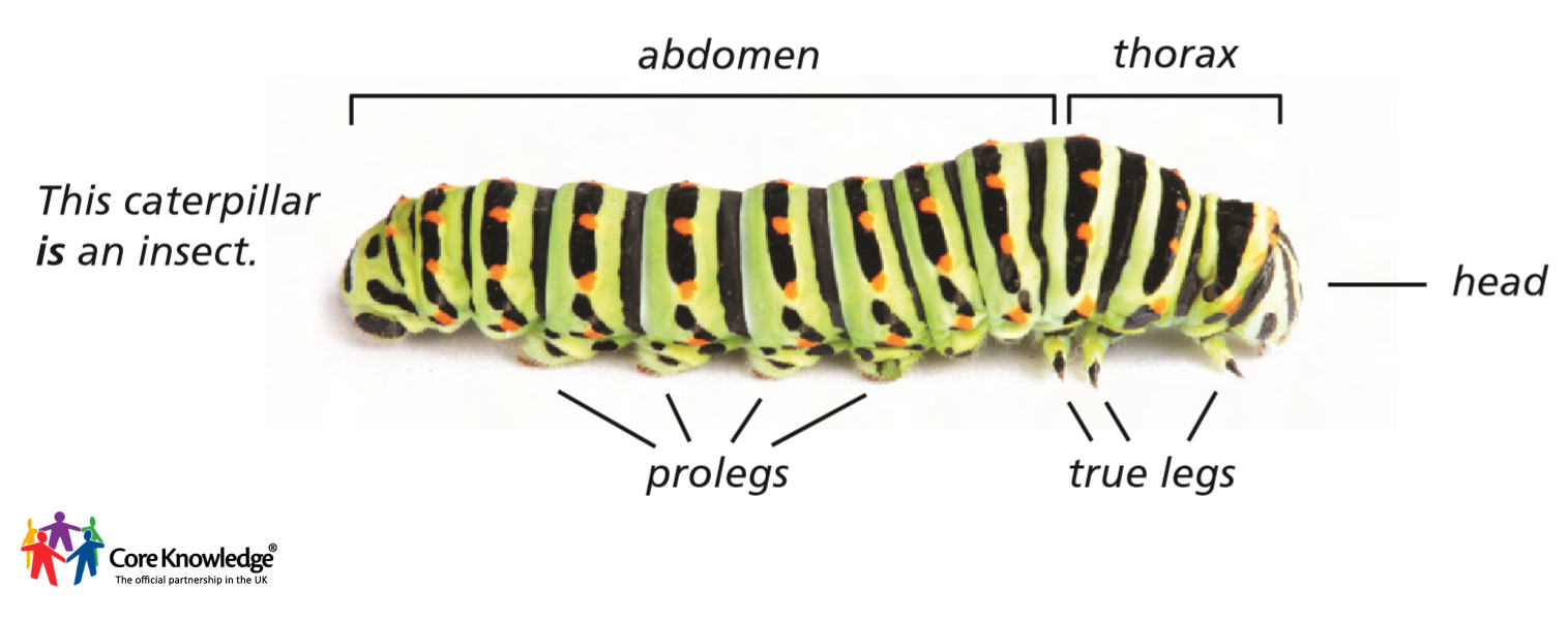 insect diagram 2