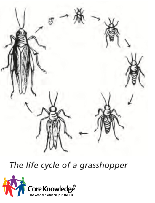 lifecycle grasshopper